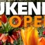 Giardino botanico Keukenhof, un tuffo nella cromoterapia