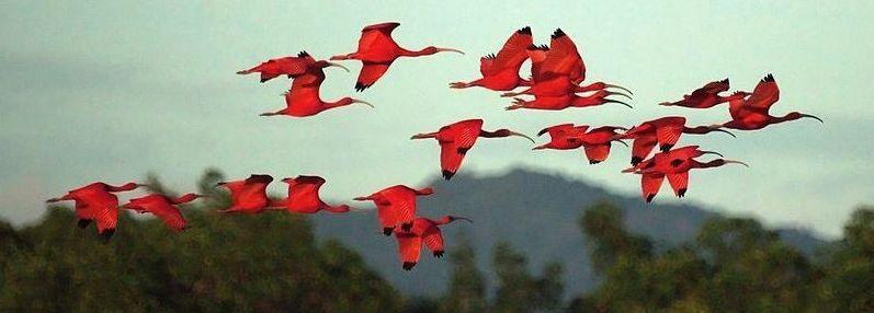 Brasile: vedere gli ibis scarlatti sul Delta do Parnaíba al tramonto