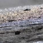 Islanda, impressioni a caldo: è un pianeta diverso